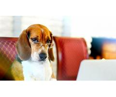 Дрессировка собак , кинология , зоопсихология.