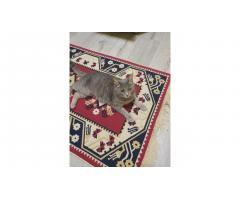 Найдена домашняя кошка